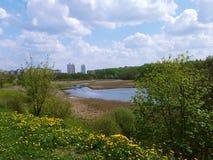 在一条小河附近的开花的蒲公英在城市停放 库存照片