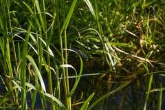 在一条小河附近的美丽的蜻蜓 免版税库存图片