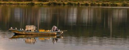 在一条小船栖息的海鸥 库存图片
