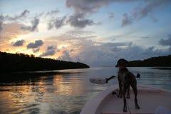 在一条小船的愉快的狗在日落在佛罗里达钥匙的Islamorada 免版税库存图片