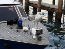 在一条小船的甲板的海鸥在运河的重创在威尼斯 免版税库存图片