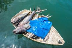 在一条小船的金枪鱼鲜鱼 免版税库存图片