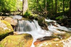 在一条山河的小瀑布在夏天 免版税库存照片