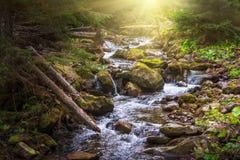 在一条山河的美丽的风景急流在阳光下 库存图片