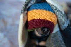 在一条帽子和毯子的逗人喜爱的小狗在房子里 库存图片