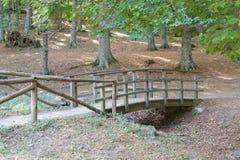 在一条干燥河的绿色栗子围拢的木结构 库存照片