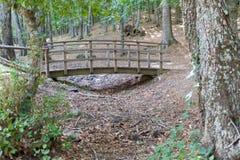 在一条干燥河的绿色栗子围拢的木结构 库存图片
