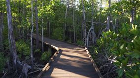 在一条木板走道的长的步行在森林里在澳大利亚,移动式摄影车 股票视频