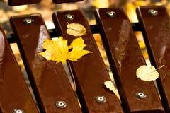 在一条棕色长凳的黄色枫叶 免版税库存图片
