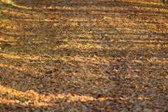 在一条森林道路的秋叶在阳光下 免版税库存照片