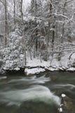 在一条河一边的积雪的杉树在冬天。 免版税库存图片