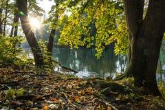 在一条河的日出有五颜六色的秋叶的 库存照片