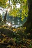 在一条河的日出有五颜六色的秋叶的 免版税库存照片