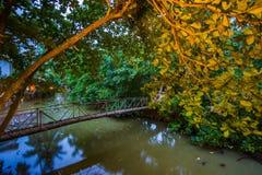在一条河的桥梁在森林里 免版税库存照片