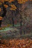 在一条河的视图在一秋天日 免版税库存照片