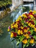 在一条河道的花在瑞士 免版税库存图片