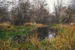 在一条沼泽的河的河岸的芦苇 秋天蓝色长的本质遮蔽天空 免版税图库摄影