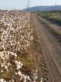 在一条泥铺跑道的轮胎轨道在A开花的棉花领域附近 库存照片