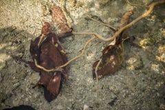 在一条流动的小河下的叶子 免版税库存图片