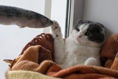 在一条温暖的一揽子接触大结冰的鱼包裹的猫 库存照片