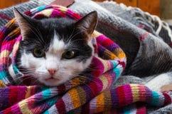 在一条温暖的围巾包裹的猫 免版税库存照片