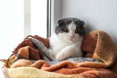 在一条温暖的毯子包裹的猫收留大结冰的鱼 图库摄影