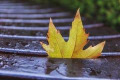 在一条湿长凳的下落的槭树秋天叶子 免版税库存照片