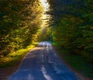 在一条狭窄的森林地路下的单点透视 有薄雾的树梢森林地在明亮的阳光、遮荫树&森林线的路下 图库摄影
