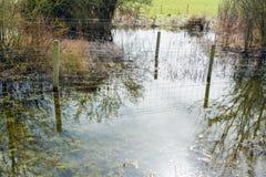 在一条狭窄的河附近的自然保护区域在英国春天 库存照片