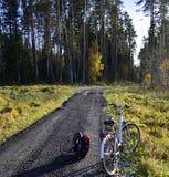 在一条狭窄的道路的一辆偏僻的自行车在森林里 免版税库存照片