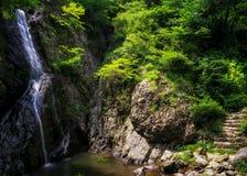 在一条生苔小河的瀑布 免版税图库摄影