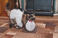 在一条白色围裙和裙子2603的猫 免版税库存照片