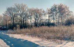 在一条积雪的农村路的狗 村庄街道,冬天,雪,漂泊,晴天 免版税图库摄影