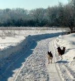在一条积雪的农村路的狗 村庄街道,冬天,雪,漂泊,晴天 库存照片