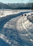 在一条积雪的农村路的狗 村庄街道,冬天,雪,漂泊,晴天 免版税库存图片