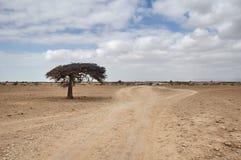 在一条空的沙漠道路的孤立树 图库摄影