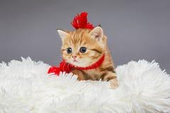 在一条红色围巾的小的小猫 免版税库存照片