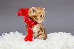 在一条红色围巾的小的小猫 库存图片