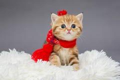 在一条红色围巾的小的小猫 库存照片