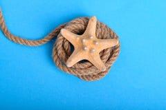 在一条绳索的大海星在蓝色背景中 库存照片