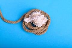 在一条绳索的白色贝壳在蓝色背景中 免版税库存图片