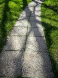 在一条绿色路的树阴影 免版税库存图片