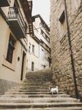 在一条老欧洲街道上的一条小品种狗起重器罗素狗 免版税库存照片