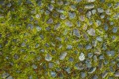 在一条老石路的绿色青苔 免版税库存图片