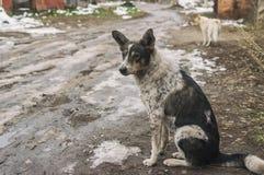 在一条肮脏的街道上的流浪狗 免版税库存照片