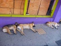 在一条街道上的三条睡觉狗有一失踪的 库存图片