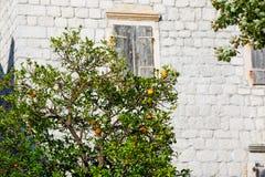 在一条街道上的橙树在有大厦的欧洲背景的 库存照片