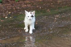 在一条街道上的湿无家可归的哀伤的小猫在雨以后 免版税库存照片
