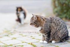 在一条街道上的猫在有另一只猫的城市在背景 免版税图库摄影