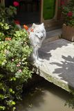 在一条街道上的白色狗位子由大厦 图库摄影